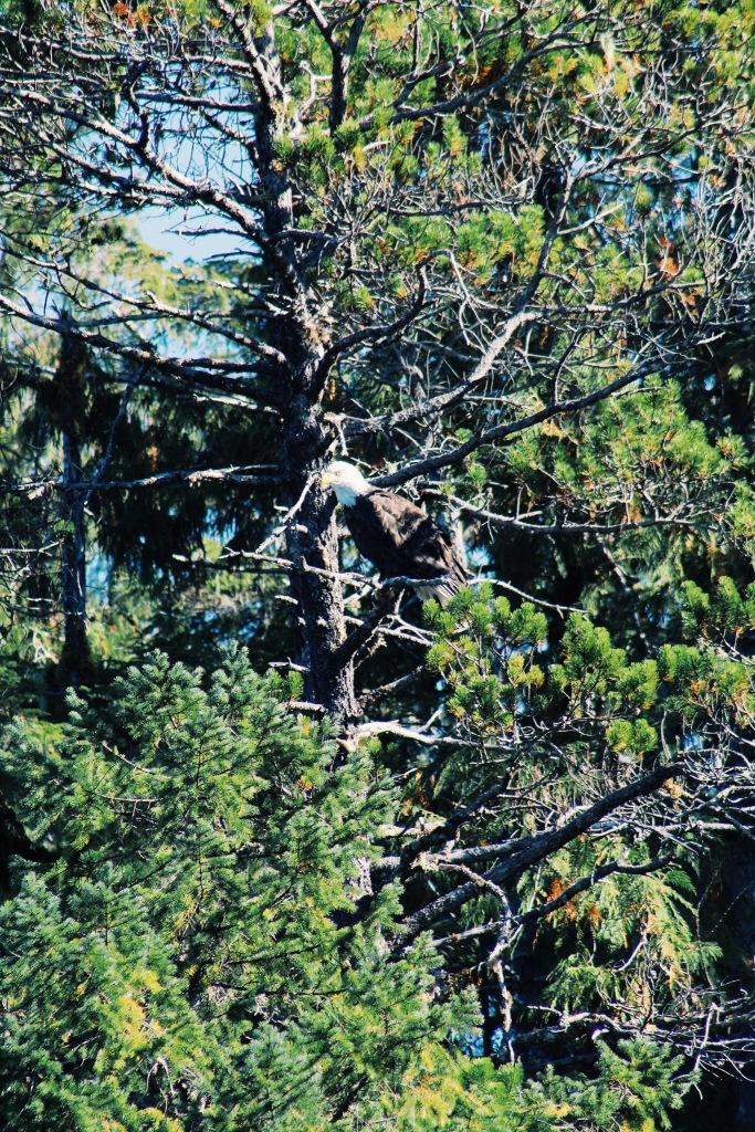 ...and an eagle // photo by Kaelin.